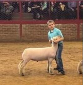 Haws Club Lambs | Winners